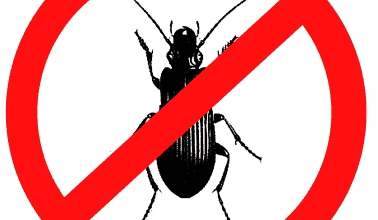 How to Get Rid of Water Bugs - Best Home Remedies